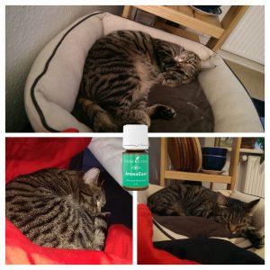 Xoco schläft - auch ohne AromaEase