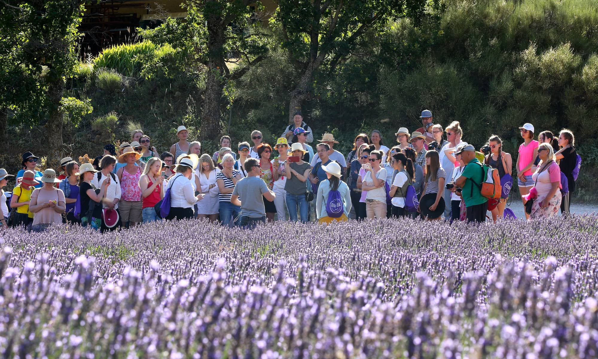 Young Living - Menschen im Lavendelfeld